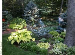 landscaping with hostas around trees...