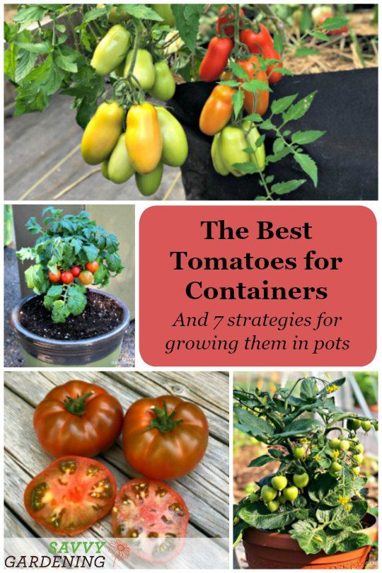 Best Tomato Variety For Container Gardening