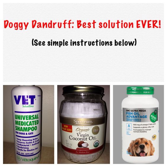 Pinterest the world s catalog of ideas for What does fish oil do for dogs