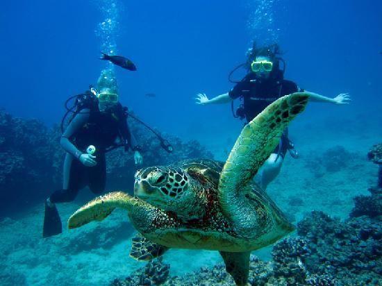 Photo sous-marine a Honolulu