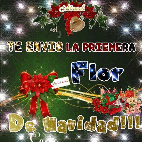 Giflandia: Te regalo la Primer Flor de Navidad!!!