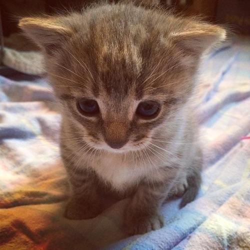 :) cutie