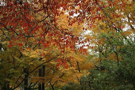 Fall color at Brooklyn Botanic Garden