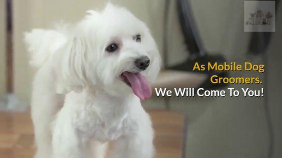 Best Mobile Dog Groomer In Warrington Call 07808 819904 Fluffy Butz Do Dog Groomers Groomer Dogs