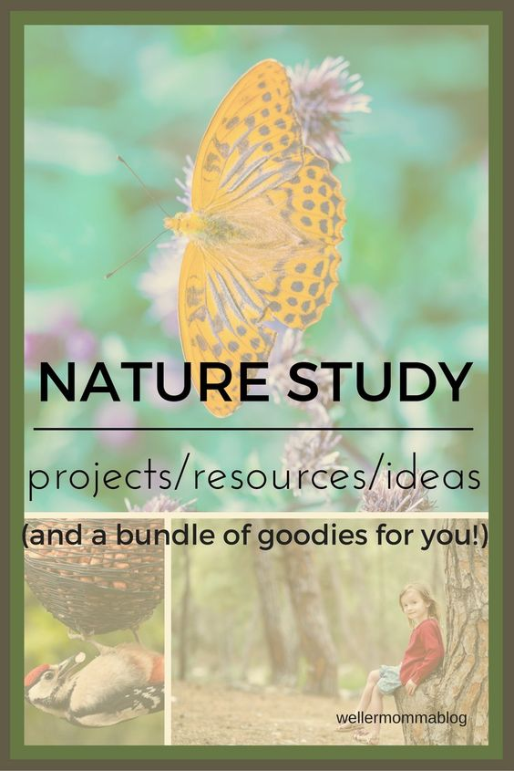 Nature study can cover all the bases in homeschool. Find resources, ideas and…