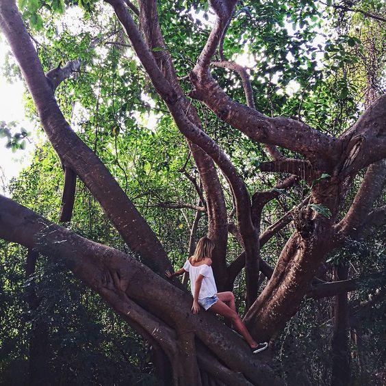 Always climbing trees