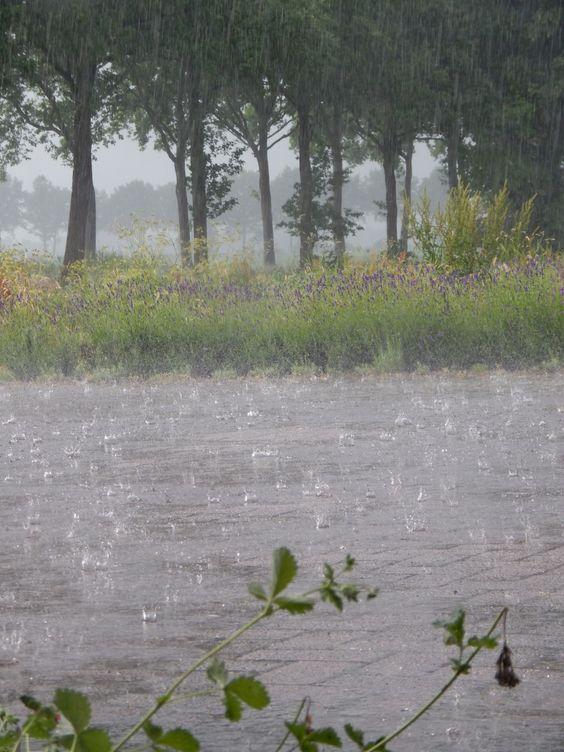 Rain☂ #rain