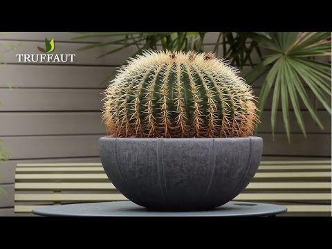 Quel Engrais Utiliser Pour Votre Cactus Comment Proteger Son Cactus En Hiver Decouvrez Tous Nos Conseils Sur L Entr En 2020 Jardinerie Truffaut Jardinerie Epiphyte
