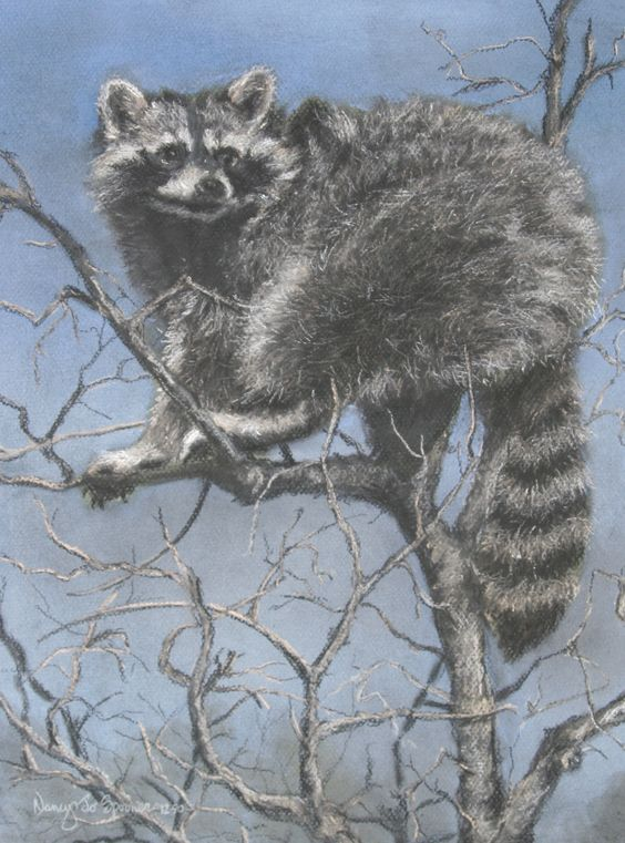 Nancy Spooner, Raccoon, chalk pastel