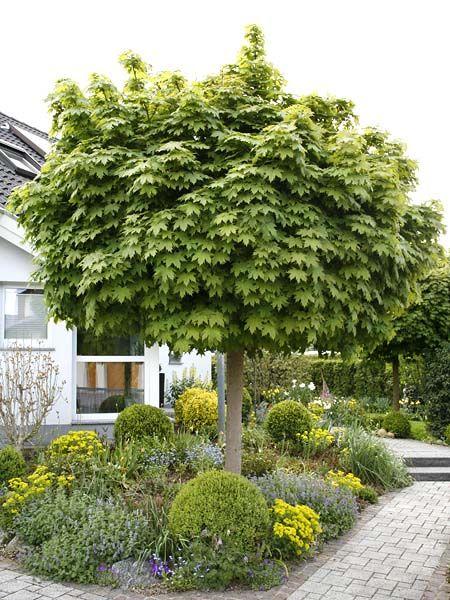 bäume für kleine gärten | vorgarten | pinterest, Garten Ideen