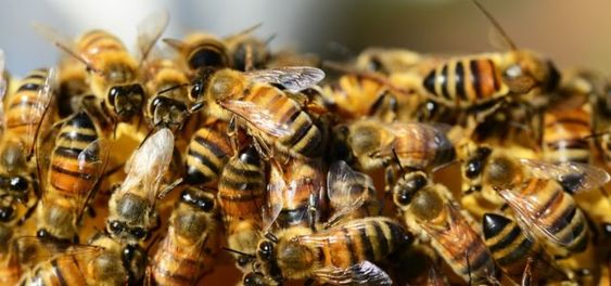 Warum Bienen Sterben Gefahrliche Insektizide Utopia De Bienenschwarm Wildbienen Bienenhaltung