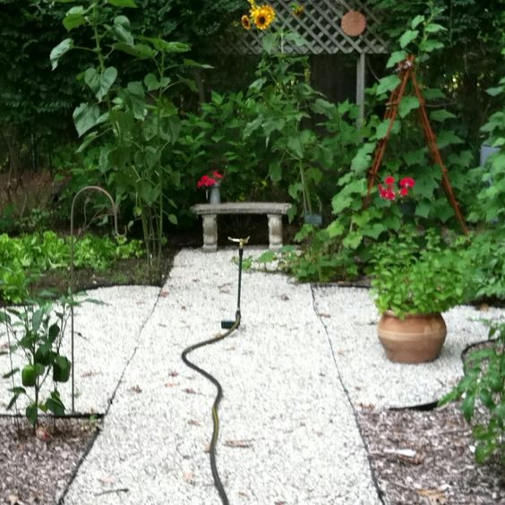 My vegetable garden made simple with a stone walkway and a sprinkler right in the center
