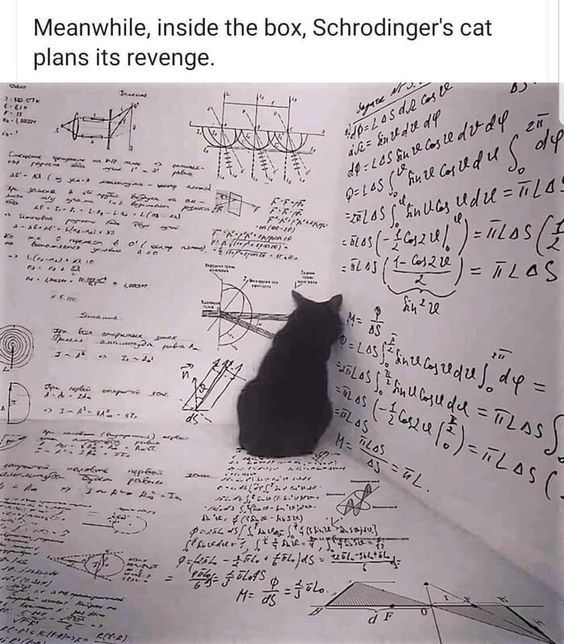 Oh Sweet Revenge These Cats Will Never Forget Or Forgive Memes I Can Has Cheezburger Schrodingers Cat Funny Animal Images Schrödinger S Cat