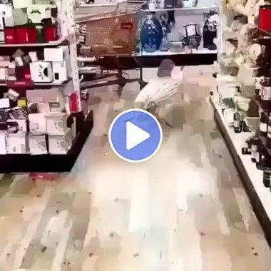 Um peixe robô andando pelo os corredores do mercado