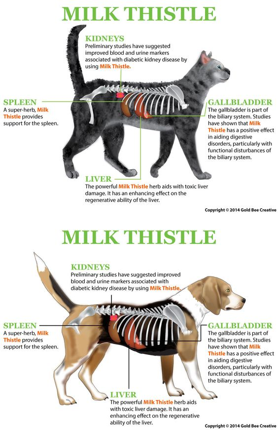 Milk Thistle for Dogs Milk thistle Dog and Puppy treats