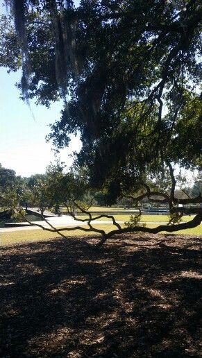 Hampton Park...gorgeous day!