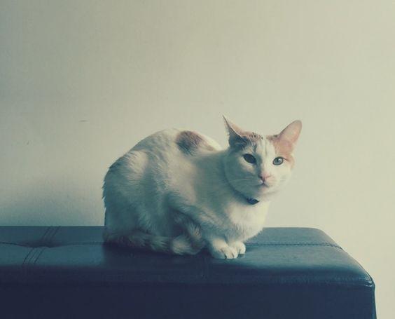 La vida de un #Gato #Bicho