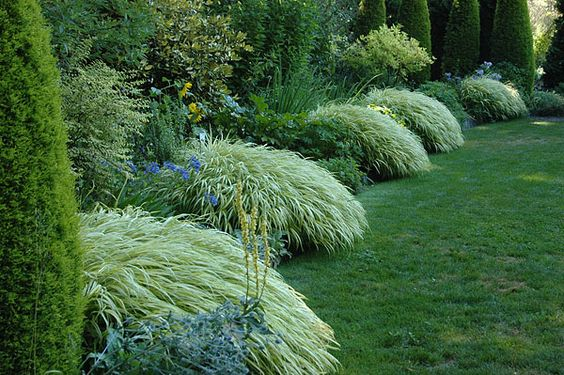 Japanese forest grass this low growing mounding plant for Low mounding ornamental grasses