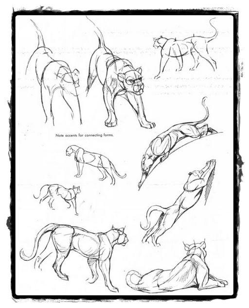 25 belos desenhos de animais para a sua inspiração 12