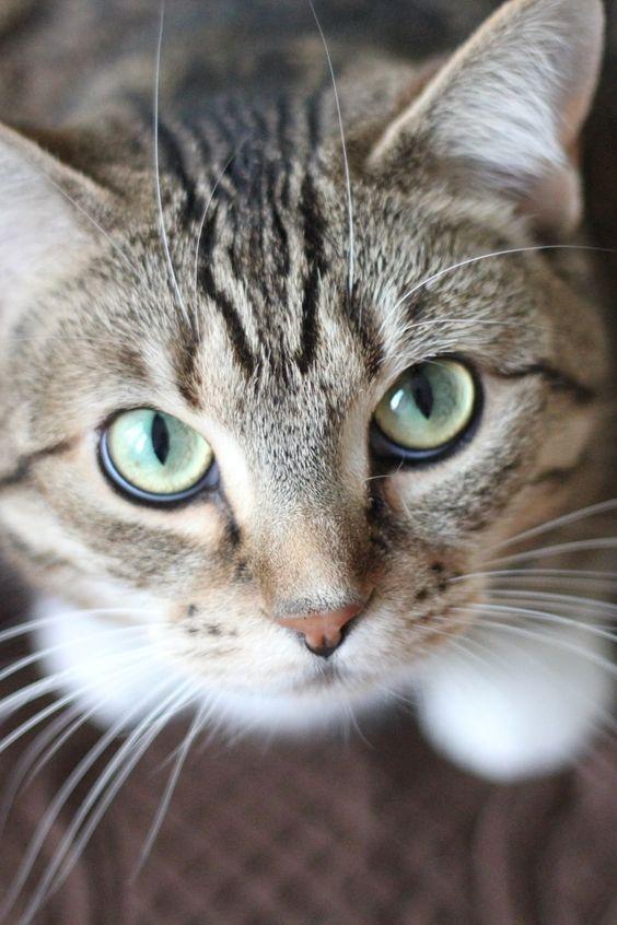 New free photo by Krysten Merriman. More work by Krysten on Pexels at https://www.pexels.com/u/kmerriman #animal #cat #whiskers