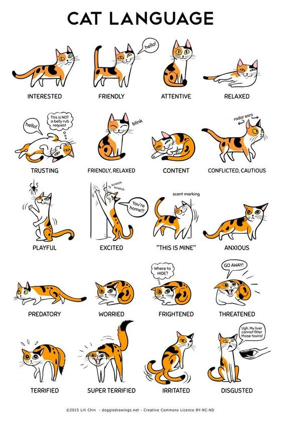 Understanding a Cats Body Language #funnyanimals #cats