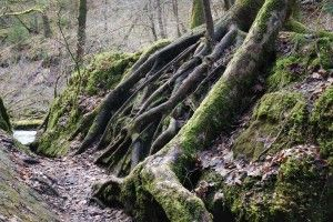 Wutachschlucht – Drei Schluchten Pfad. Eine Rundwanderung auf wildromantischen Pfaden unter den schönsten Felsengalerien des Hochschwarzwaldes. Diese abwechslungsreiche Rundwanderung beginnt am Wanderparkplatz der Drei Schluchten Halle in Bachheim. Von hier aus führt uns der Weg auch direkt hinunter in die Wutachschlucht. Auf breiten Forstwegen wandern wir hinab, bis wir am Fuß der Schlucht die Wutach […]