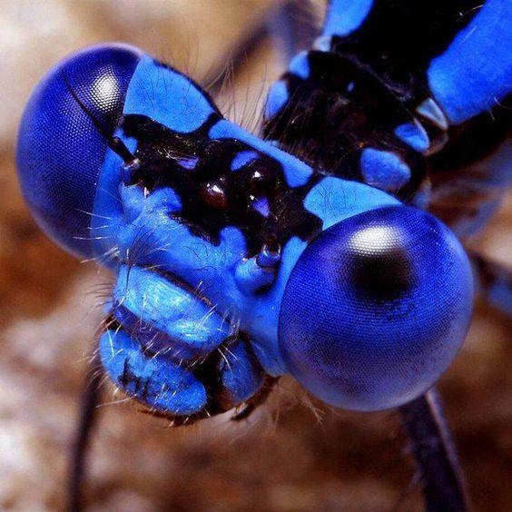 Afbeeldingsresultaat voor bug blue eyes