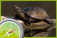ePilot: Reptil des Jahres 2015 – die Europäische Sumpfschildkröte - schule.at