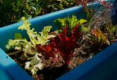 How to Grow Your Own Salad in a Box