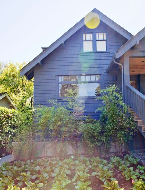 Trotman Residence | Landscape Design Vancouver | Black Bamboo | elephant ears | Bergenia