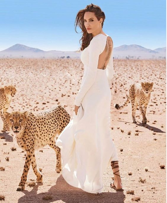 WHAT IS ANGELINA JOLIE  DOING WITH WILD CATS | Starconnect Media