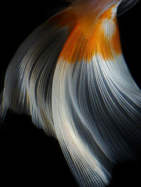 still life fish photography  |  hiroshi iwasaki
