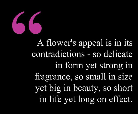 """""""A flower's appeal is in its contradictions so delicate"""