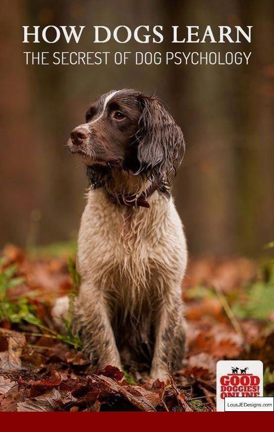 Low Cost Dog Grooming Near Me Dogallergymedicine Dog Psychology Dog Training Dog Training Books