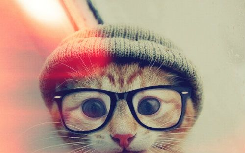 hipster kitty : )
