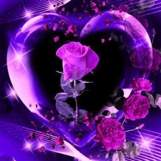 Purple Rose With Images Purple Roses Wallpaper Purple Flowers