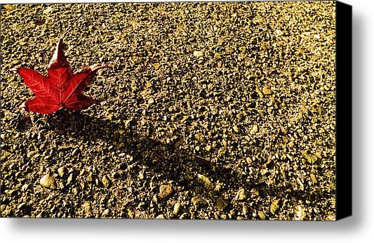 A Lone Leaf  Stretched Canvas Print / Canvas Art By Katica Vrhovac