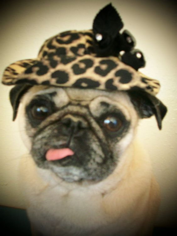 I can't help it, when you place the hat on my head, my tongue pokes out!