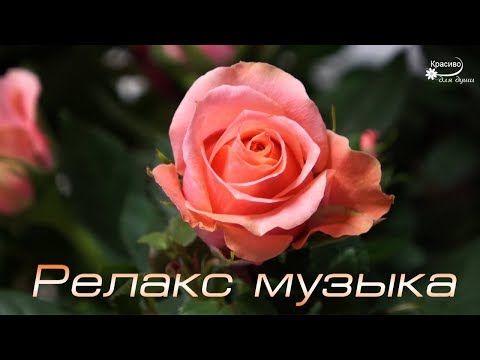 Результат пошуку зображень за запитом просто розы и красивая музыка картинки