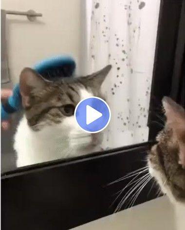 Dia de beleza do gato Penteando cabelo