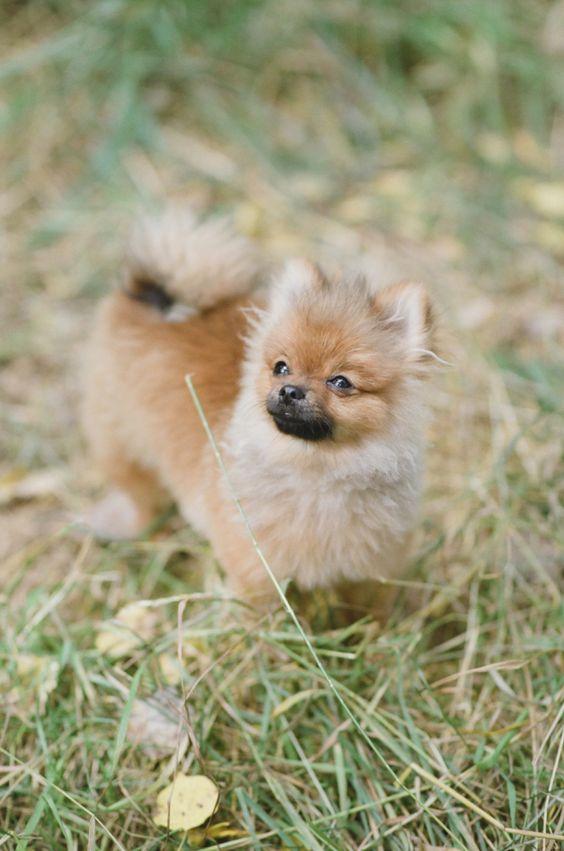 The cutest little pup! http://www.stylemepretty.com/colorado-weddings/telluride/2016/01/22/romantic-intimate-telluride-elopement/ | Photography: Tamara Gruner - http://tamaragruner.com/