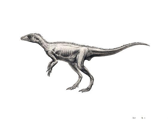 eoraptor.jpg (600×423)