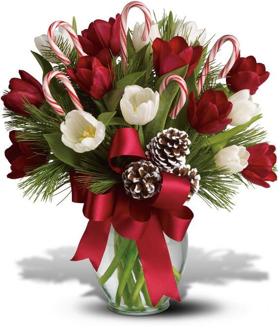 Bonitas tulipas vermelhas e brancas estão radiantes entre os verdes de Natal, o abeto de Douglas e pinho branco. Decorado com bastões de doces, pinhas foscas e fita de cetim vermelho, e apresentado em um gracioso vaso de vidro transparente.  Fotografia: Teleflora.com.