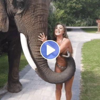 Olha como o elefante apertou a mulher