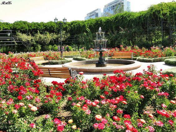 Jardin de rosas parque araucano santiago de chile places for Jardin japones de santiago