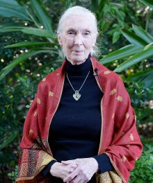 Search results for - Jane Goodall