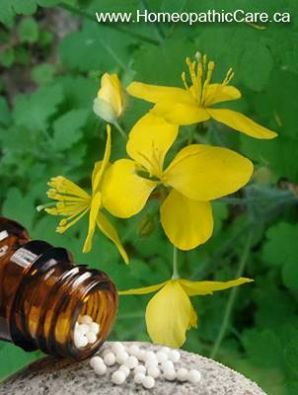Homeopathic Chelidonium is a great liver and gall bladder remedy. It helps with expelling and preventing gall stones. It is especially useful when there is a constant pain under inferior angle of right scapula.