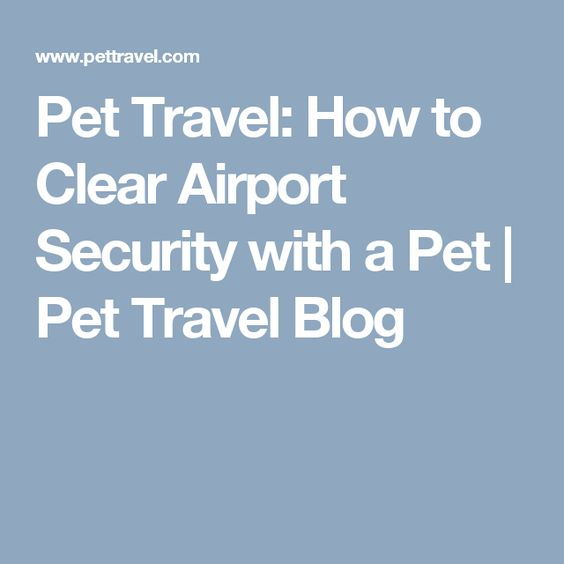 Pet Travel: How to Clear Airport Security with a Pet | Pet Travel Blog