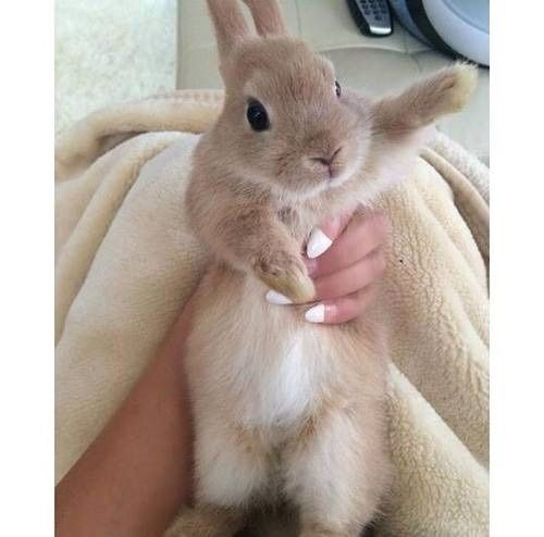 Dear Dumbass , we DON'T hold our bunnies like this !!!! DP ...