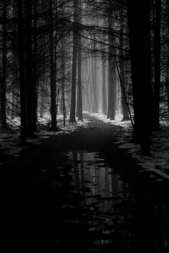dark places forest trees - photo #20
